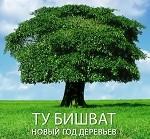 83210664_4638534_tree5001_2_