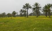 800px-PikiWiki_Israel_19167_Blooming_in_Eshkol_Park