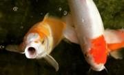 fish_main