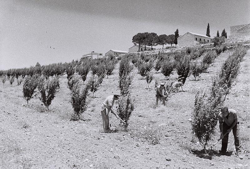 800px-Kfar_Etzion_1947