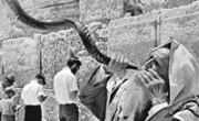 Шофар у Стены Плача в Иерусалиме