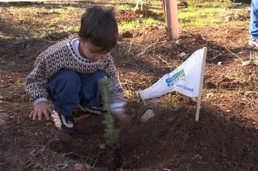 Мальчик сажает дерево в лесу Бен-Шемен, Ту би-Шват 1999 г.