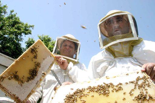 Израильские пчеловоды