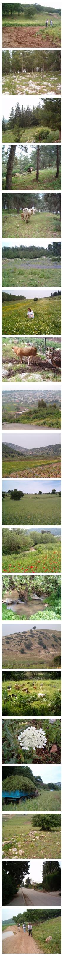 (c)www.sarma.co.il