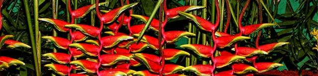 Международная выставка цветов в Хайфе 2012