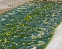 Процесс производства биотоплива из водорослей