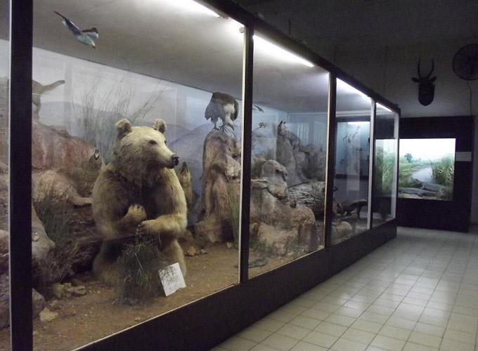 Картинки по запросу музей природы в иерусалиме