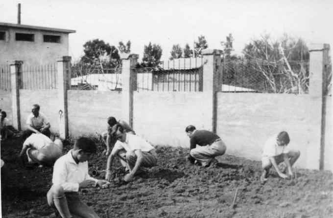 Посадка деревьев в кибуце Ган-Шмуэль, конец 40-х годов.