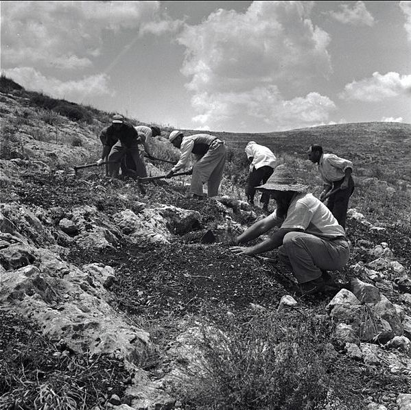 604px-PikiWiki_Israel_14791_Planting_of_the_Gilboa_Mountains