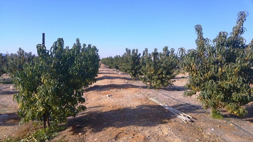 Сельское хозяйство в пустыне Арава, Израиль