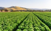 california_agriculture_main