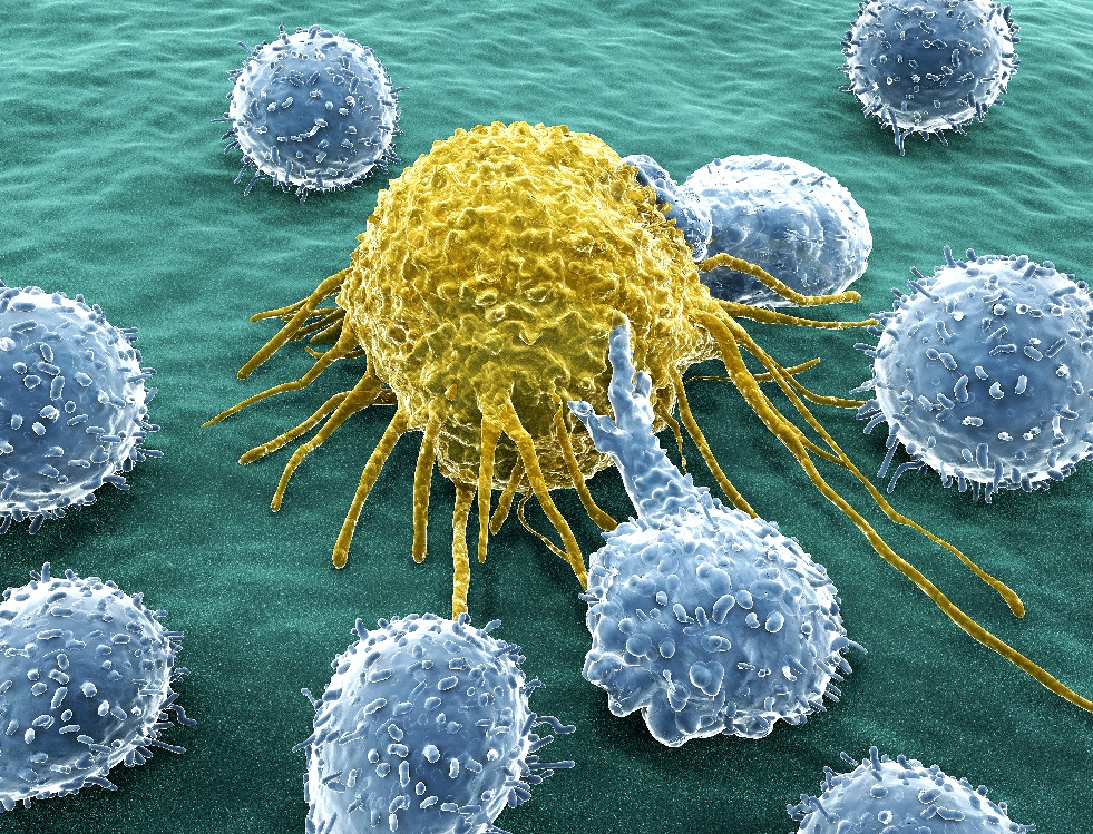 cancer_cells_limphosits