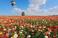 Spring in Israel_main
