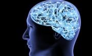 human_brain_main