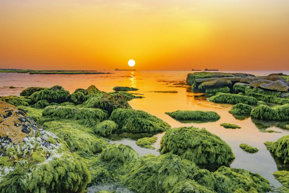 seaweed_israel
