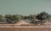 חורשת האלונים © אבי חי Eli Shamir חורשת אלונים, שמן על בד, 240 140 סמ, 2008