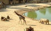 jerusalem-zoo